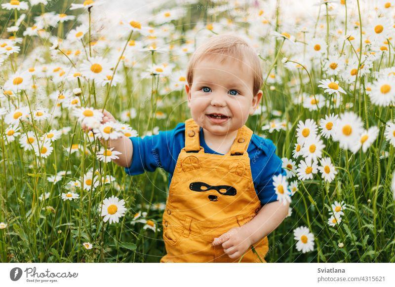 Ein blauäugiger und blonder Junge steht auf einer Blumenwiese mit Kamillenblüten und lächelt Wiese Kind Feld schön Lächeln Sommer Glück Spaß Freude niedlich