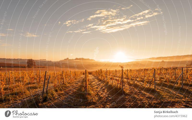 Herbstlandschaft im Morgennebel in der Steiermark, Österreich steiermark herbst herbstlich morgens früh morgennebel landschaftsidyll morgenrot morgensonne