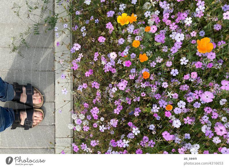 In Betrachtung der Blumenwiese Wiese orange gelb lila weiß grün Vogelperspektive Natur Blüte Pflanze Sommer Garten Blühend Farbfoto Außenaufnahme natürlich