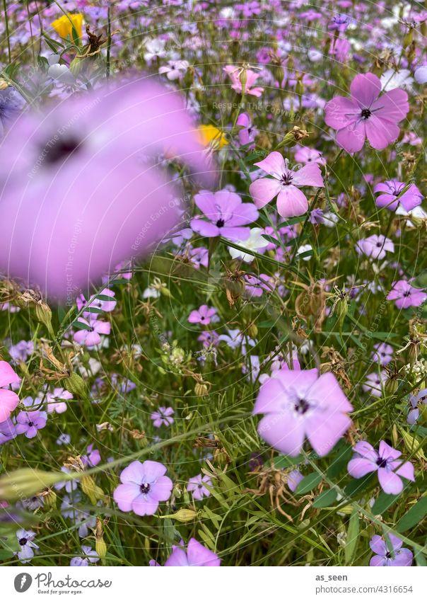 In der Blumenwiese Wiese orange gelb lila weiß grün Vogelperspektive Natur Blüte Pflanze Sommer Garten Blühend Farbfoto Außenaufnahme natürlich schön