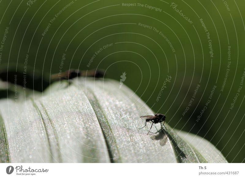 Fliegen 3 Tier nah Natur Pfliegen Außenaufnahme Nahaufnahme Makroaufnahme