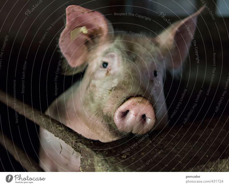 spaßgesellschaft | kostenträger nackt Tier kalt Umwelt Glück Zeichen Reichtum Fressen gefangen Fleisch Nutztier Schwein satt Tierschutz Fleischfresser Glücksschwein