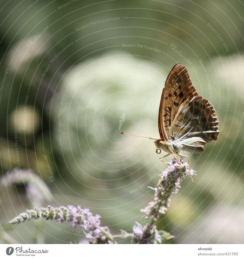Sit and Wait Natur ruhig Tier Leben Blüte Zufriedenheit Wildtier Schmetterling