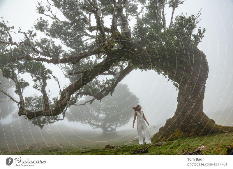 Frau mit weißem Kleid im Nebelwald weiss märchen fee Elfe schön Mensch Farbfoto Jugendliche Märchen Fee 18-30 Jahre Baum knochig knorrig Wind Außenaufnahme