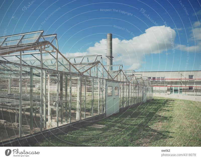 Gläserne Manufaktur Gewächshaus Glas Metall Farbfoto Konstruktion durchsichtig Wandel & Veränderung Vergänglichkeit Verfall alt eckig Gebäude Außenaufnahme
