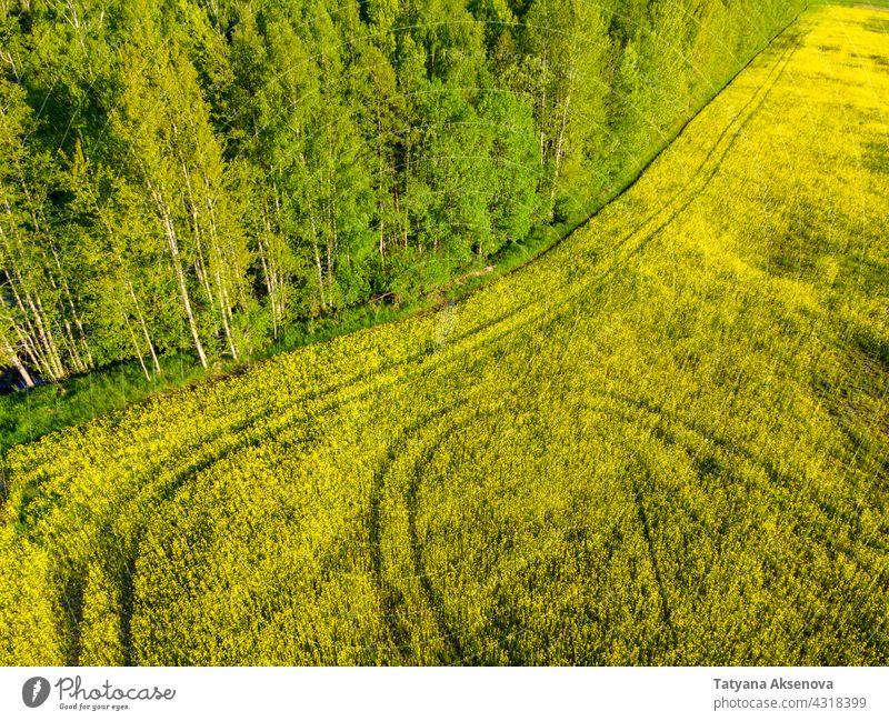 Rapsfeld im Sommer Feld gelb Pflanze Erdöl Ackerbau Blume Ölsaat ländlich Bauernhof Himmel grün Blüte Ernte Landschaft wachsen Horizont Ackerland im Freien