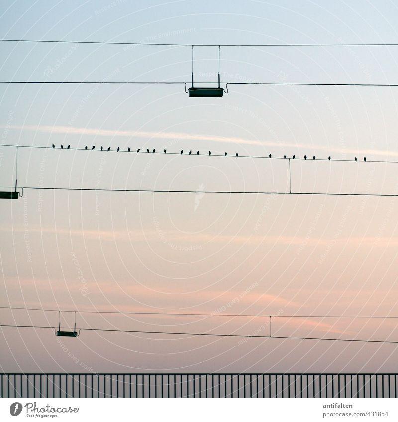 27 Himmel Natur blau Stadt Sommer Tier schwarz Wärme Frühling natürlich Linie Horizont Luft Vogel sitzen Zufriedenheit