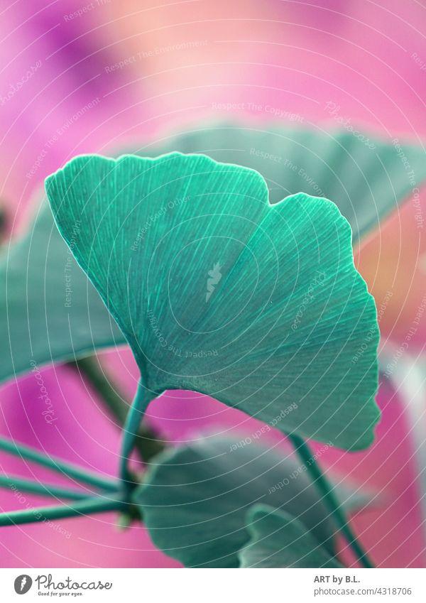 Ginkgo in farbenfroh bildbearbeitung ginkgo ginkgoblatt blätter natur hintergrund