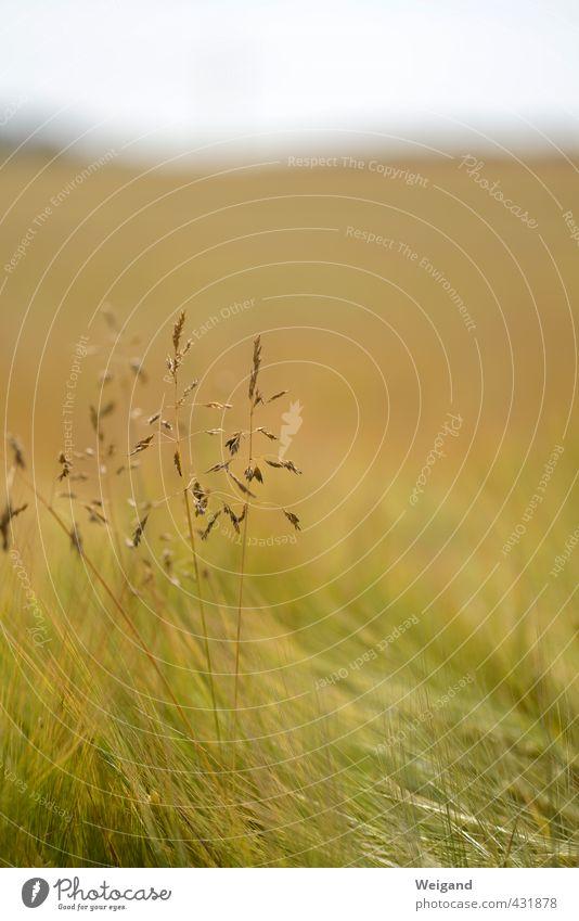 Hoffnungsträger Natur grün Pflanze Landschaft ruhig Tier Umwelt Wiese Gras Park Feld gold Gleichgewicht atmen