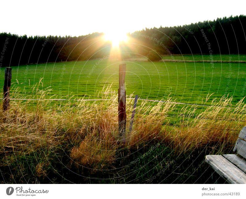 It's always the sun Zaun Zaunpfahl Gerste Weizen Aussicht Wald Wiese Sonnenstrahlen Himmel Weide Beleuchtung