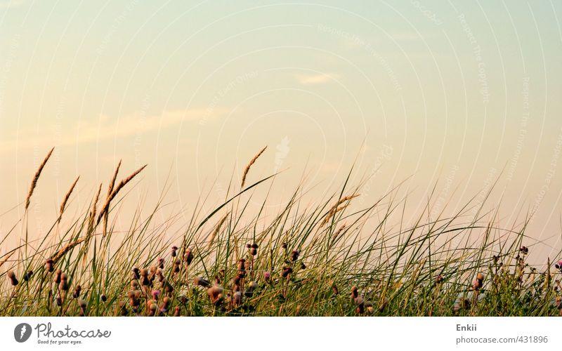 Dünengras Himmel Natur Ferien & Urlaub & Reisen blau grün Pflanze Sommer Sonne Erholung Strand Wärme Gras Küste orange Zufriedenheit Wachstum