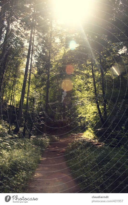 Waldlicht Sommerurlaub wandern Umwelt Natur Pflanze Sonne Schönes Wetter Wärme Baum Gras Schwarzwald schön grün Freiheit Blendenfleck Blendeneffekt Wege & Pfade