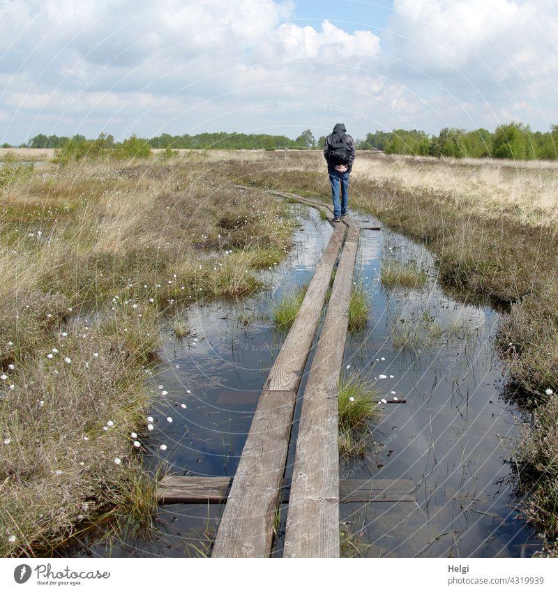 auf dem Holzweg  - Rückansicht eines Mannes, der im Moor auf einem von Wasser umgebenen  Holzsteg geht Moorlandschaft Mensch Moorwasser Gras Wollgras