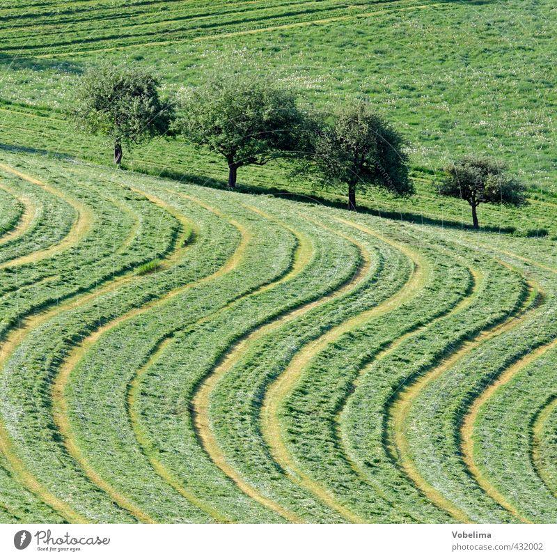 Gemähte Wiese Landwirtschaft Forstwirtschaft Umwelt Natur Landschaft Sommer Baum Gras Feld Linie natürlich grün weide mähen Traktorspur Grafik u. Illustration