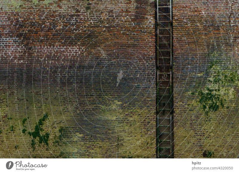 Backsteinwand mit Leiter im Hafenbecken bei Ebbe Algen grün Menschenleer Mauer