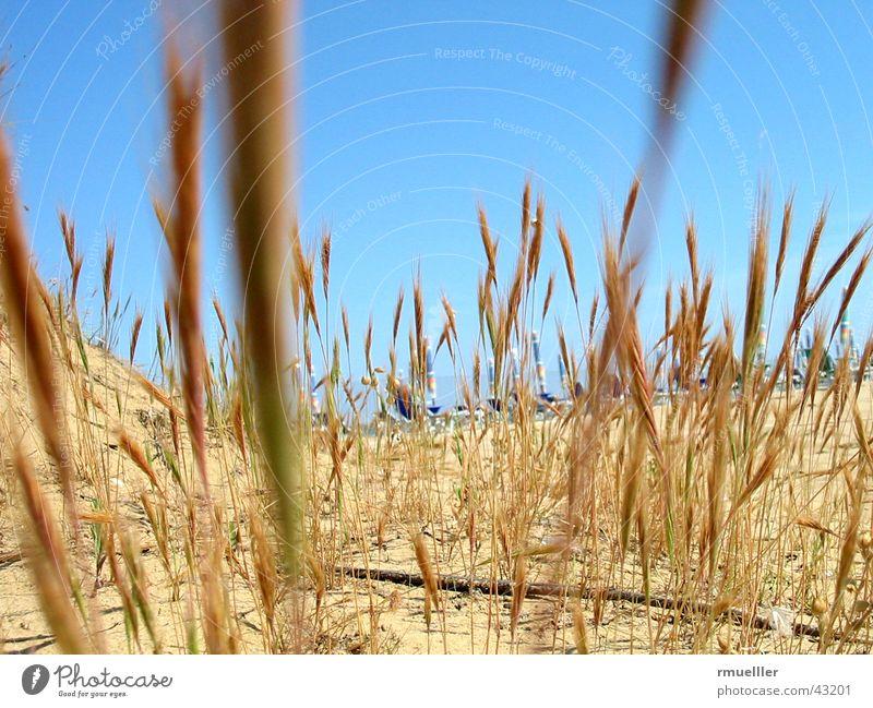 Dry and Thirsty Natur Himmel Meer Sommer Strand Ferien & Urlaub & Reisen Leben Gras Sand Italien heiß