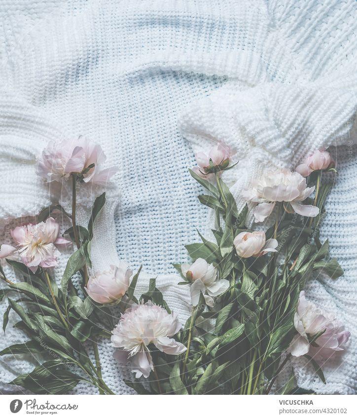 Hintergrund aus pastellrosa Pfingstrosen, die auf einer weißen, gestrickten Decke verstreut sind. Blick von oben. Konzept der Schönheit. Rahmen Pastell gestreut