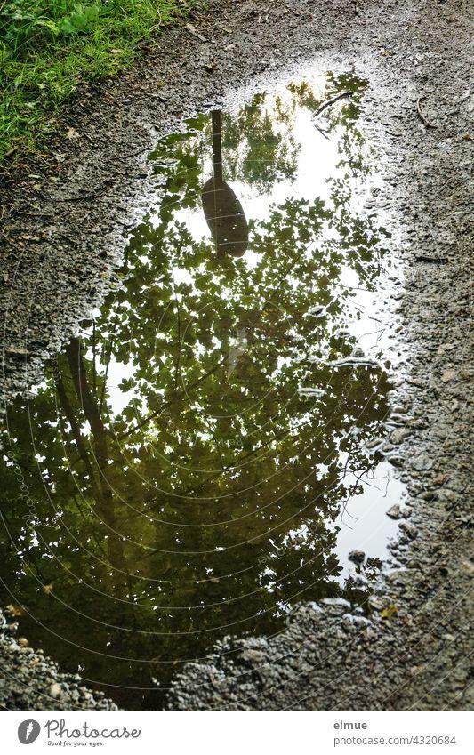 In einer Pfütze auf einem Feldweg spiegeln sich die Baumkrone eines Ahornbaumes und ein rundes Verkehrsschild Wasser Spiegelung Weg nass Regenwetter grün