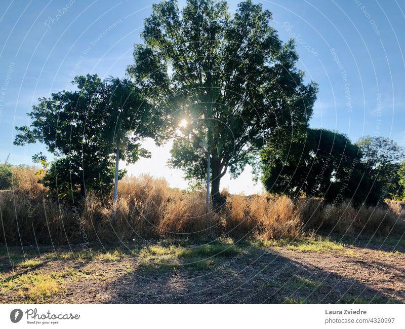 Das Licht durch den Baum Morgen Sonnenlicht Natur Landschaft Umwelt Ansicht Saison im Freien schön Morgenlicht natürlich malerisch Bäume Hintergrund Schönheit