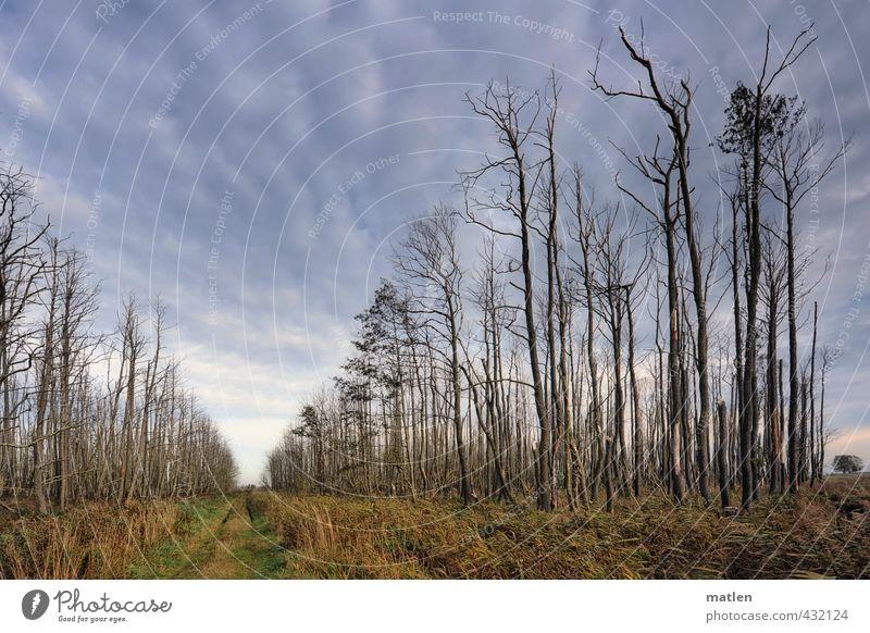 dead or alive Natur Landschaft Pflanze Himmel Wolken Wetter Schönes Wetter Baum Gras Wiese Wald blau grau grün Tod Wege & Pfade Farbfoto Außenaufnahme