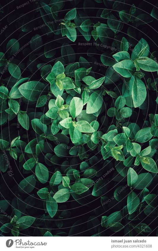 grüne Blätter strukturierter Hintergrund im Frühling Pflanze Blatt Garten geblümt Natur natürlich Laubwerk Vegetation dekorativ Dekoration & Verzierung abstrakt