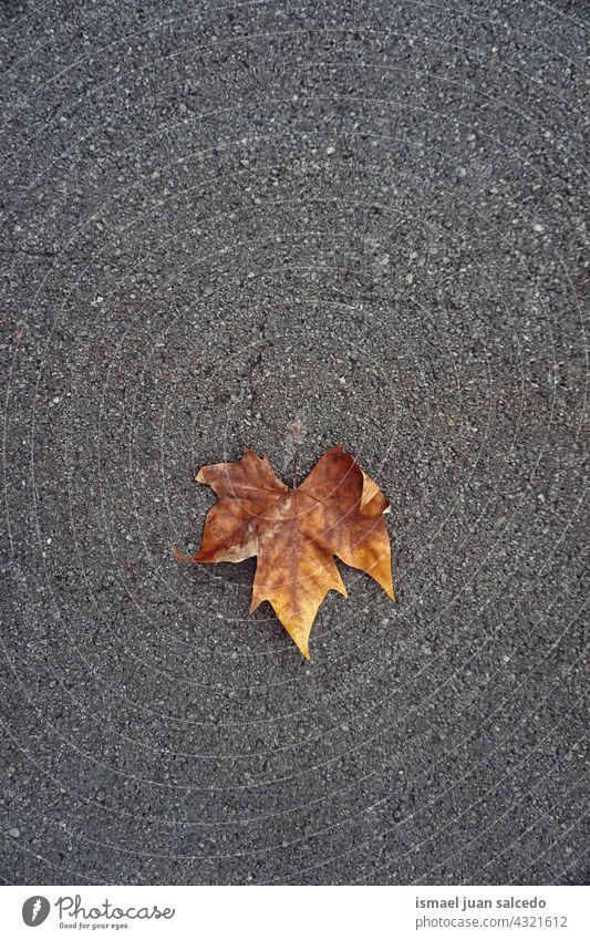 braunes Ahornblatt auf dem Boden in der Herbstzeit Blatt trocknen Natur natürlich Laubwerk texturiert im Freien Hintergrund Herbstsaison Herbststimmung