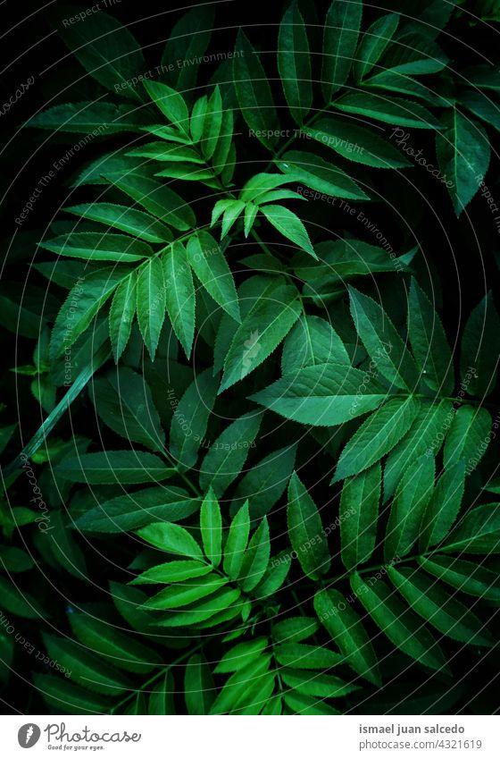 grüne Pflanzenblätter im Frühling, grüner abstrakter strukturierter Hintergrund Blätter Blatt Garten geblümt Natur natürlich Laubwerk Vegetation dekorativ
