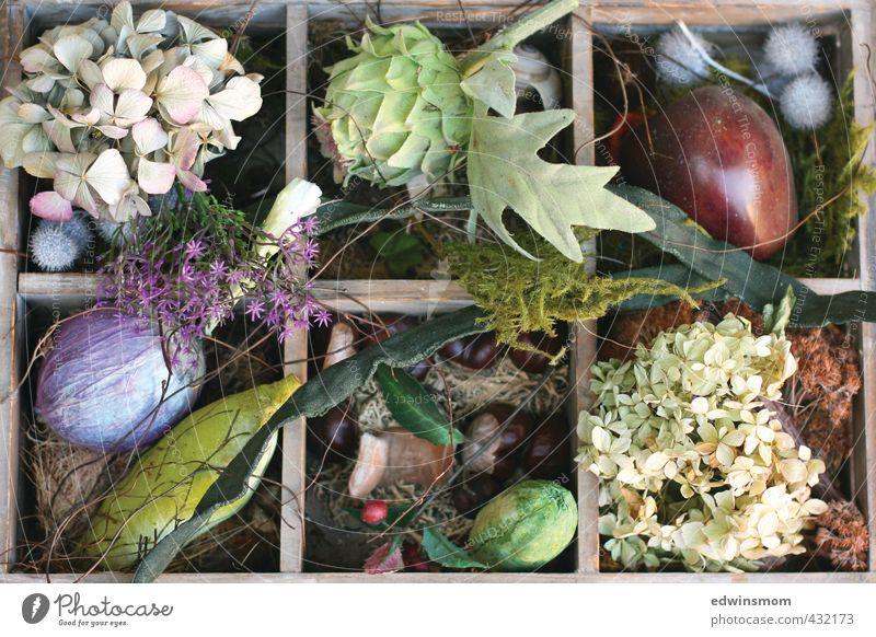 Herbstliche Mischung Freizeit & Hobby Basteln Garten einrichten Dekoration & Verzierung Pflanze Tier Moos Blatt Blüte Hortensienblüte getrocknet Kastanie