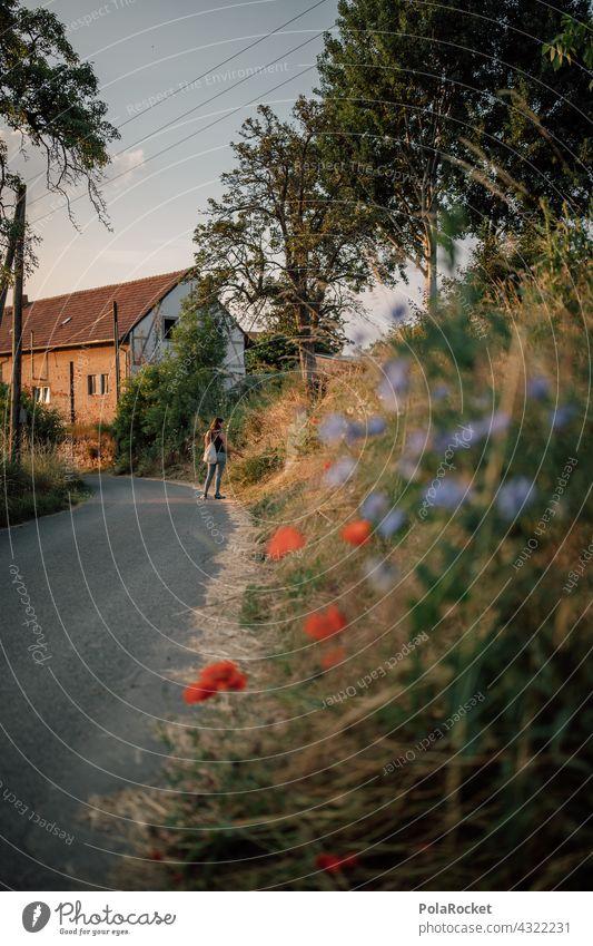 #A# Sommerabend-Spaziergang Mohn blaue Blumen Bauernhof Landschaft Landwirtschaft Landleben Wegrand Idylle idyllisch friedlich Natur Feld Außenaufnahme Farbfoto