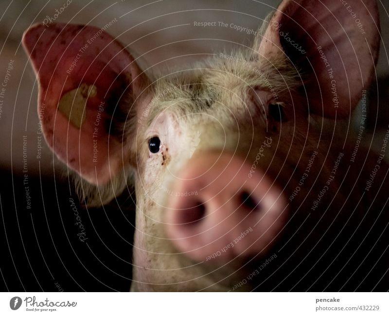 300 x Schwein gehabt! Nutztier 1 Tier Zeichen Gefühle Stimmung Glück Freundschaft Tierliebe Neugier Interesse Tod Landwirtschaft Glücksschwein Steckdose