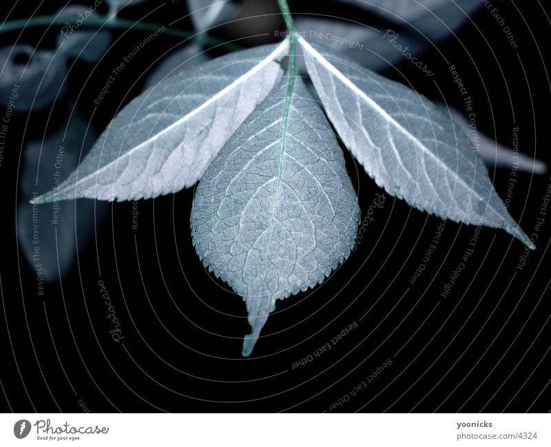Leaf Blatt Natur