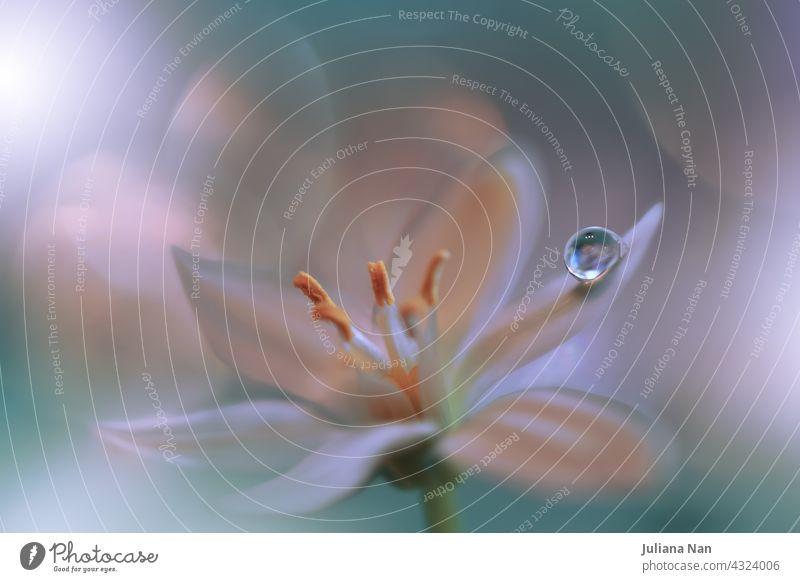 Schöne Makroaufnahme von magischen Blumen.Border Art Design. Magisches Licht.Extreme Nahaufnahme Makrofotografie.Konzeptuelles abstraktes Bild.Grüner und weißer Hintergrund.Fantasy Art.Creative Wallpaper.Beautiful Nature Background.Amazing Spring Flowers.Water Drop.