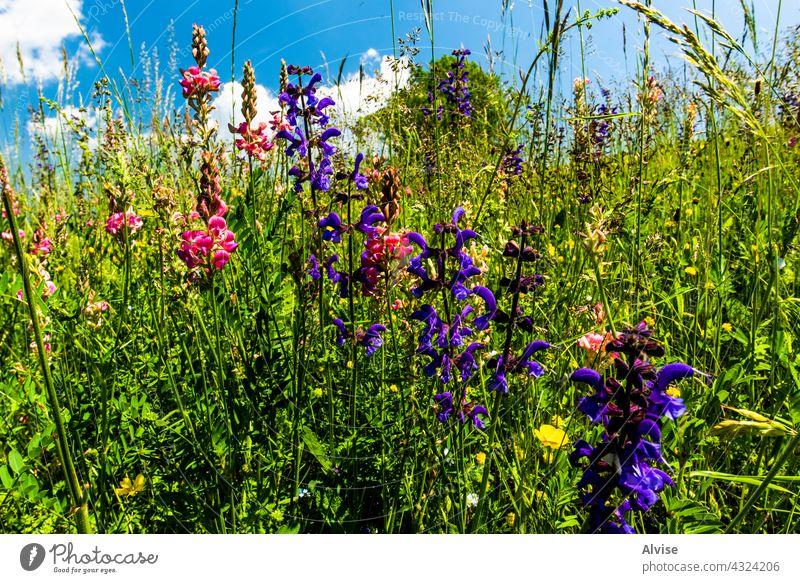 2021 06 13 Lessini blühender Frühling 2 Feld Natur Himmel grün Gras Sommer Hügel Hintergrund Landschaft Wiese Saison Blume Vektor blau Umwelt Cloud Pflanze