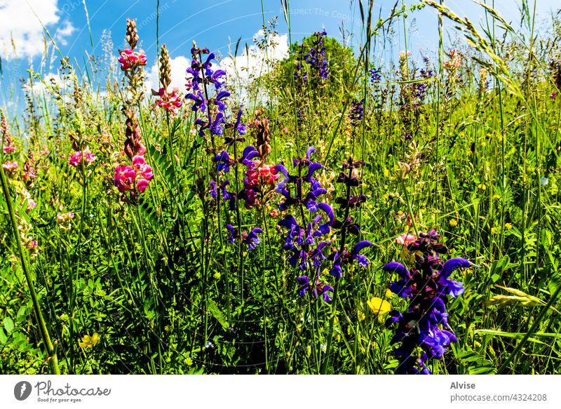 2021 06 13 Lessini blühender Frühling 6 Feld Natur Himmel grün Gras Sommer Hügel Hintergrund Landschaft Wiese Saison Blume Vektor blau Umwelt Cloud Pflanze