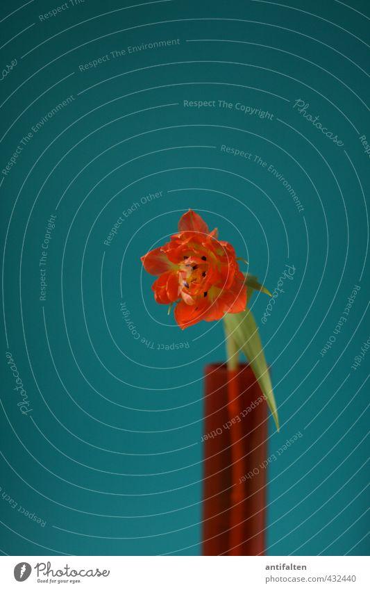 Ich sag's mit Blumen Pflanze blau grün schön Sommer Liebe Frühling natürlich Glück Freundschaft orange Dekoration & Verzierung Glas Geburtstag Fröhlichkeit