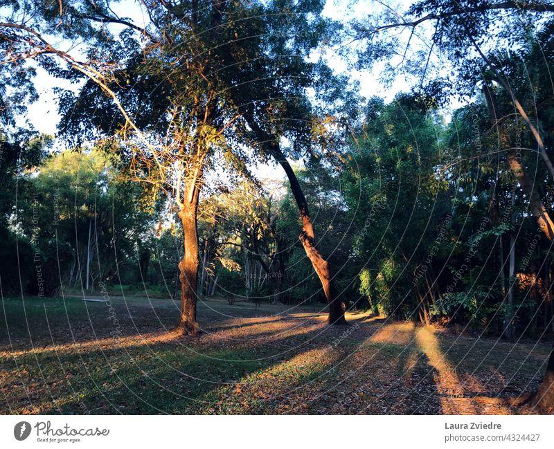 Morgenlicht im Park Sonnenaufgang Baum Bäume Landschaft Saison im Freien Natur Ansicht Umwelt schön Hintergrund malerisch natürlich Wetter Licht sonnig Schatten