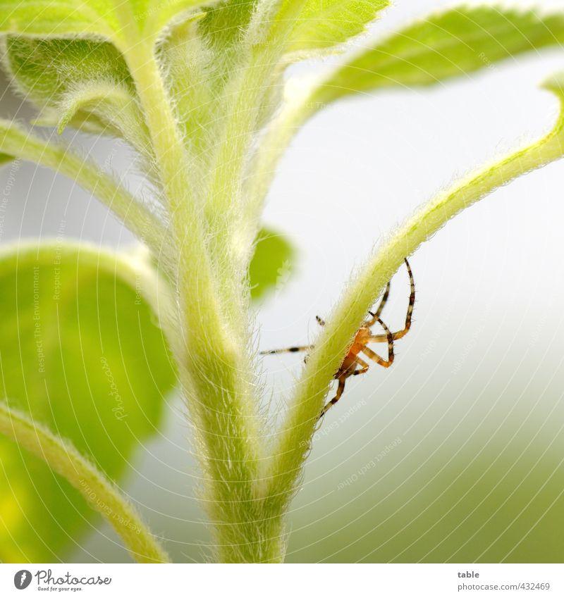 Klettermaxe Natur grün Sommer Pflanze ruhig Blume Tier Blatt Umwelt Leben Herbst klein Behaarung Idylle Wildtier warten