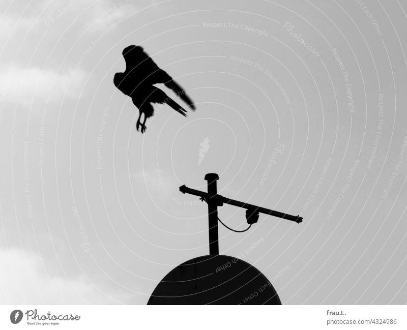 Abflug Mäusebussard Antenne Vogel Himmel Greifvogel Raubvogel Schüssel fliegen