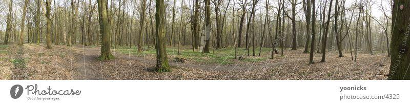 wood_small Natur Wald groß Panorama (Bildformat)