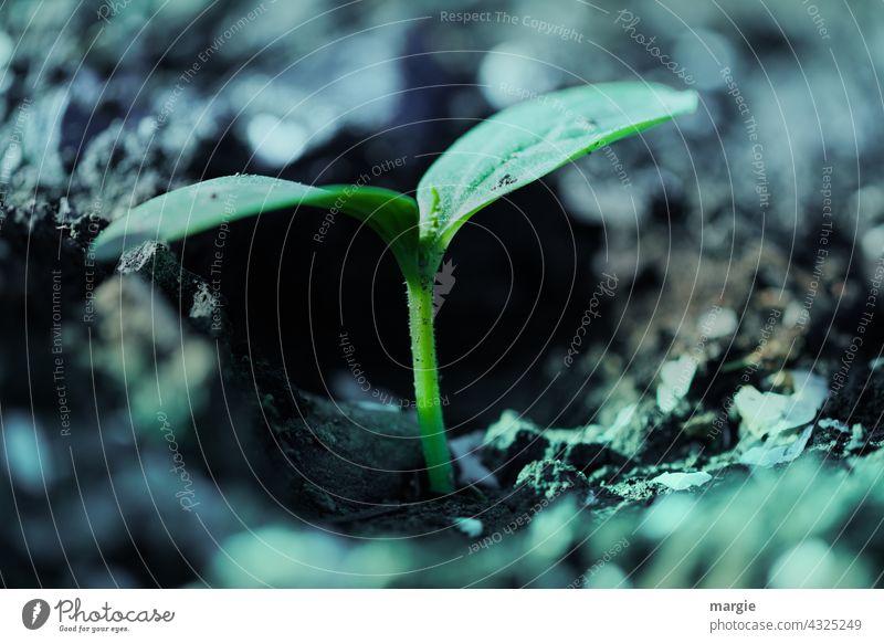 Eine kleine Pflanze in der Erde grün nah Makroaufnahme Nahaufnahme Garten Schwache Tiefenschärfe Detailaufnahme Umwelt Licht Blatt Menschenleer Natur Farbfoto