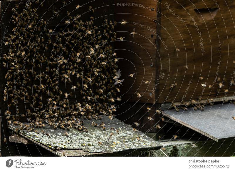 Bienen fliegen an Bienenstock Insekt Honigbiene Bienenzucht Bienenkorb Imker Bauernhof Kolonie Natur natürlich Lebensmittel Imkerei Landwirtschaft
