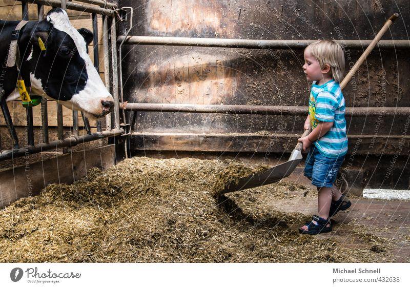 Fütterung Mensch Tier Junge klein Glück maskulin Kindheit Zufriedenheit niedlich Hilfsbereitschaft Landwirtschaft Kontakt Bauernhof Kleinkind Partnerschaft Kuh