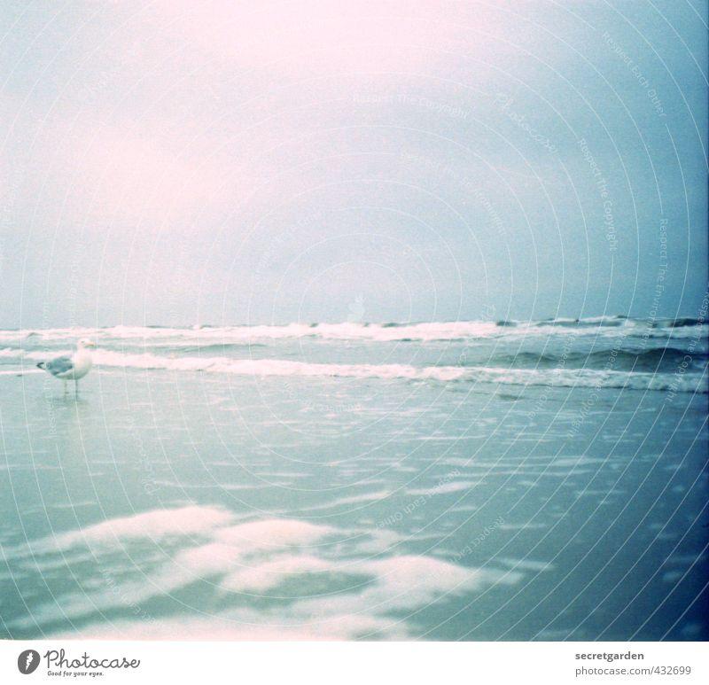 blau-rosa urlaubsfeeling mit möwe. Himmel Ferien & Urlaub & Reisen blau Wasser Sommer Meer Erholung Einsamkeit Strand Wärme Küste träumen Horizont rosa Wellen leuchten