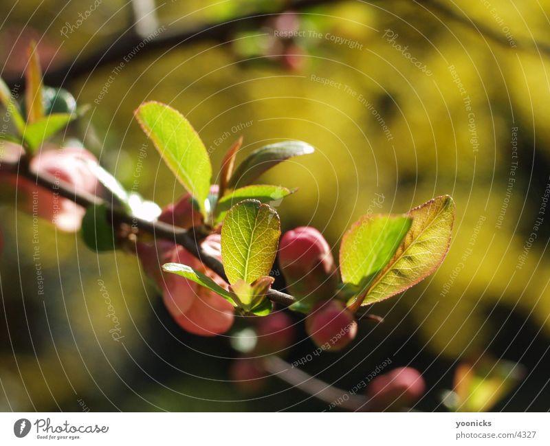 Zweig Baum Blatt Natur Strukturen & Formen