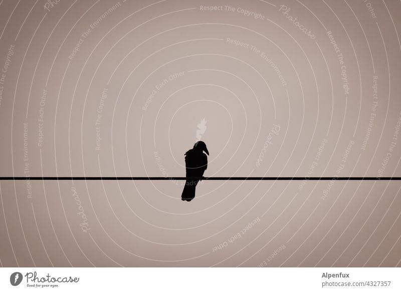 Single Krähe Vogel Rabenvögel schwarz Himmel Leitung Hochspannungsleitung Tier Schnabel Einsam Einsamkeit allein