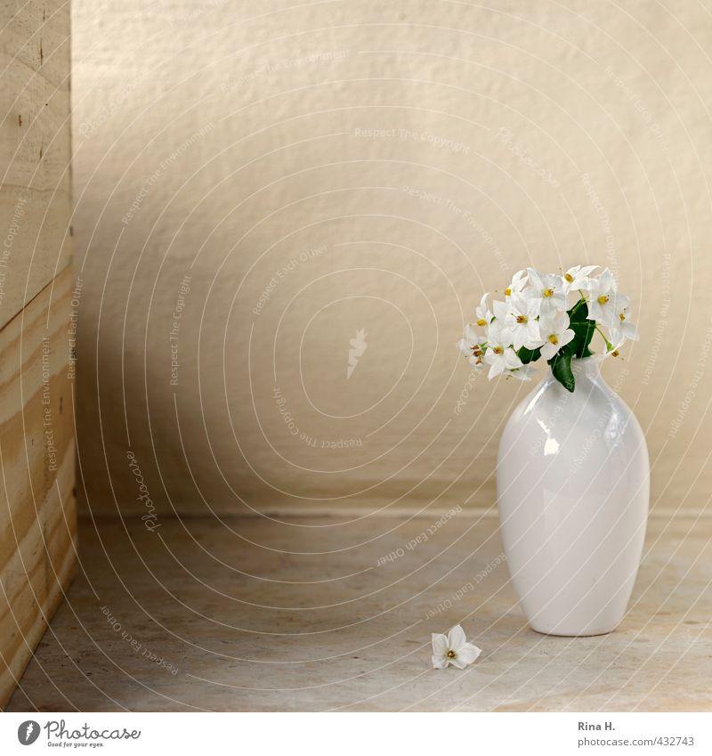 Still Blume Blüte Blühend verblüht hell Vergänglichkeit Vase weiß Stillleben Nachtschattengewächse Farbfoto Textfreiraum oben Textfreiraum Mitte