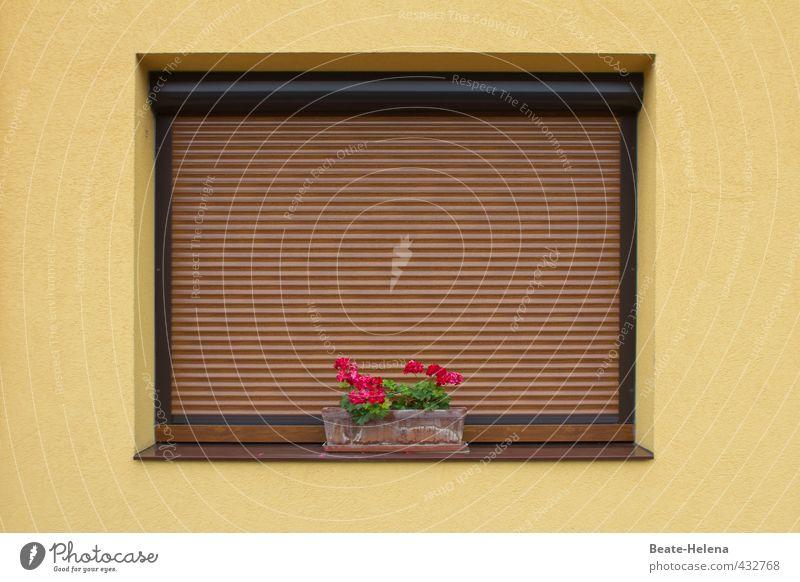 Pflanze | Augentrost Lifestyle Häusliches Leben Haus Dekoration & Verzierung Natur Sommer Klima Wetter Regen Blume Blüte Dorf Mauer Wand Fenster Stein