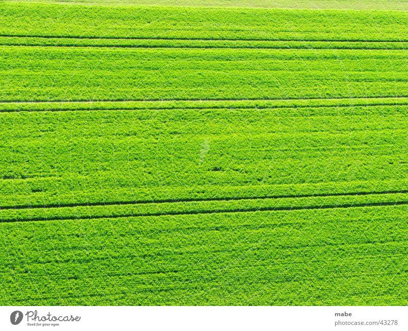 grünes Feld in der Landschaft Natur grün Frühling Landschaft Feld
