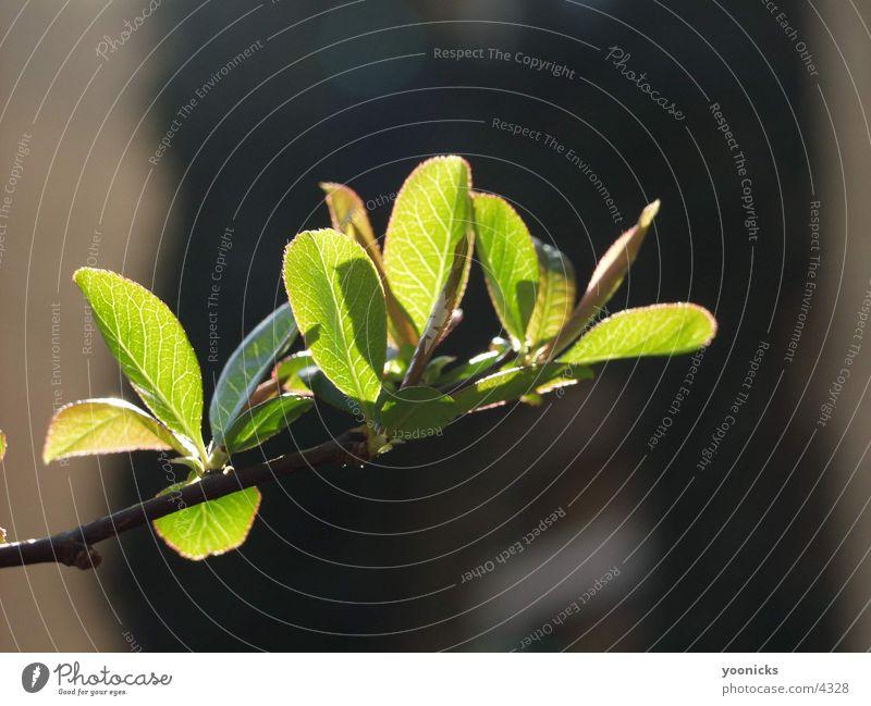 Blätter am Zweig Baum Blatt Ast