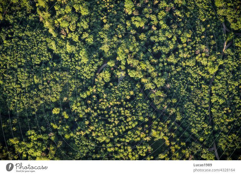 Bilck auf den Wald Vogelperspektive Ballon Ballonfahrt Sonnenuntergang Straße Wege & Pfade entdecken Abenteuer Expedition hoch in der Luft Natur leise still